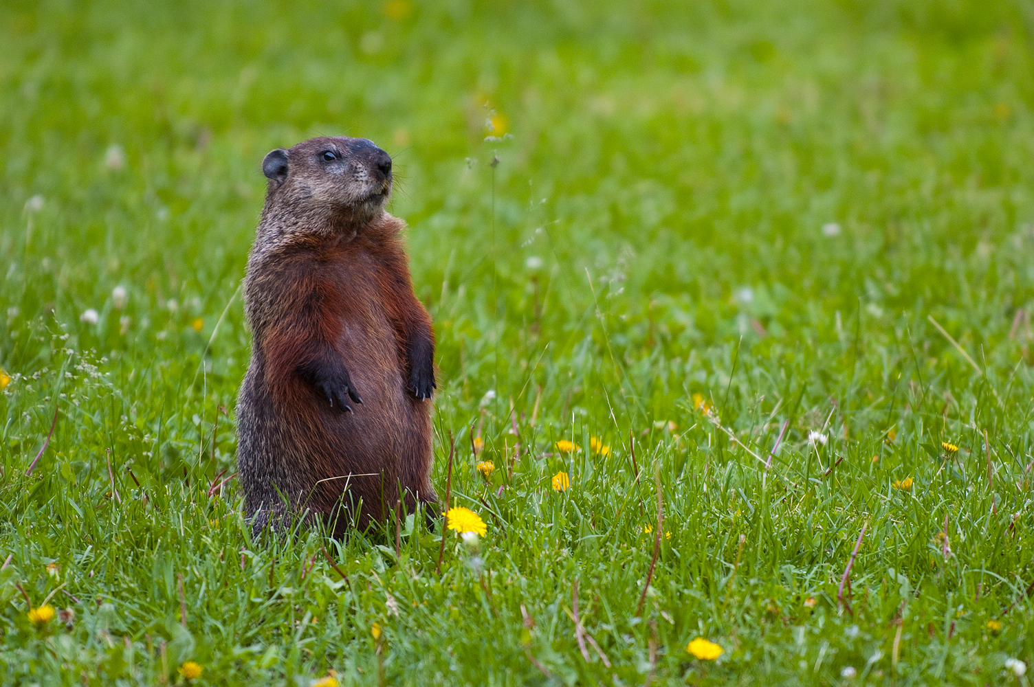 ground hog day promotion ideas