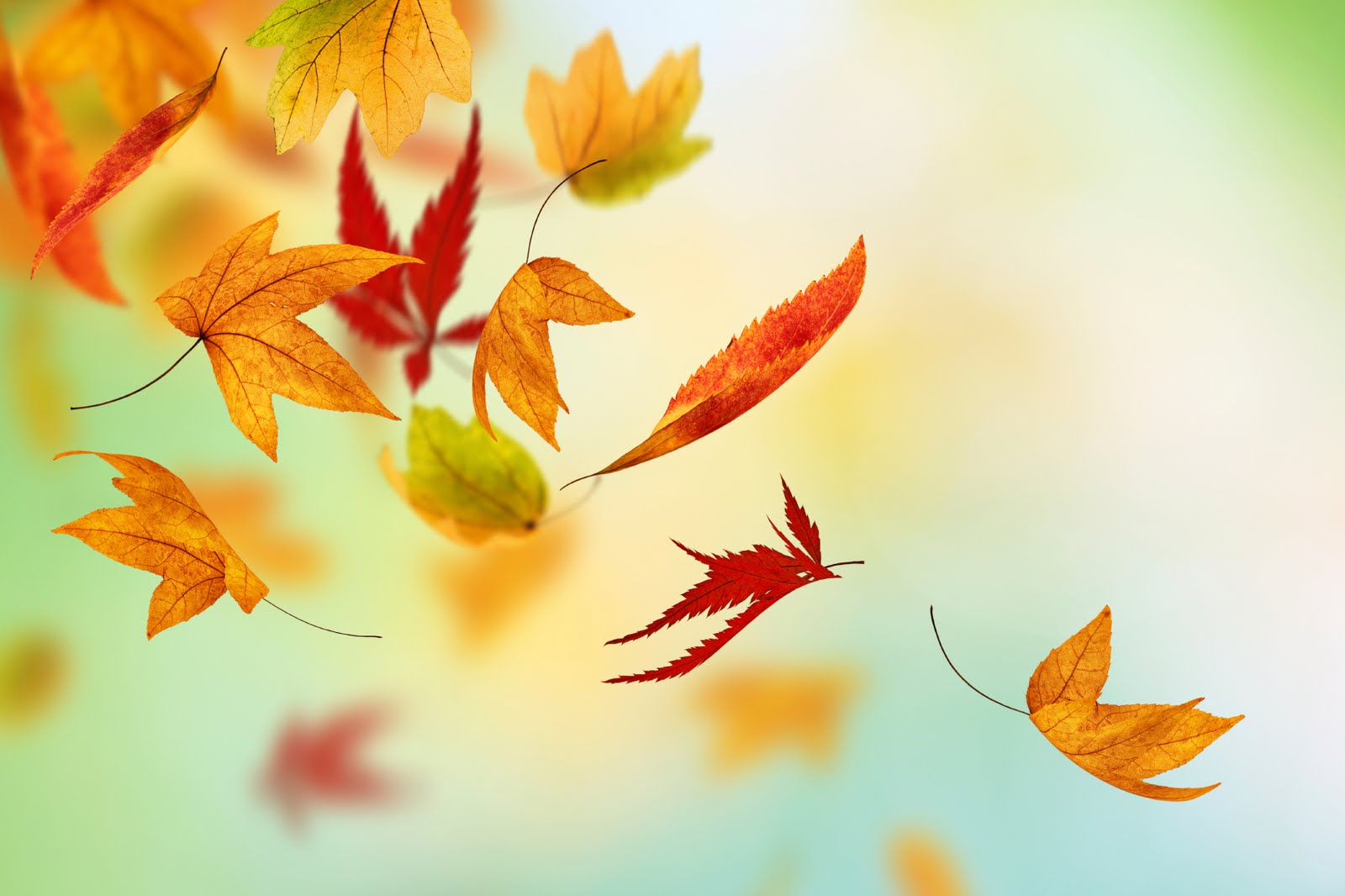 Fall into an autumn promotion